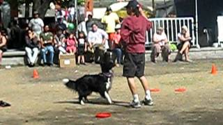 Diamond Disc Dogs - Winnipeg Fringe Festival - July 22, 2011 - 4of4