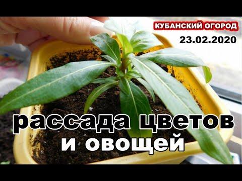 Вопрос: Как выглядят семена фуксии?