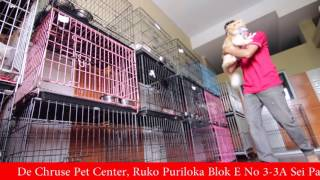 Company Profile De-Cruise Pet Centre Batam