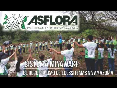 Sistema Miyawaki de recuperação de ecossistemas na Amazônia - INSTITUTO ASFLORA