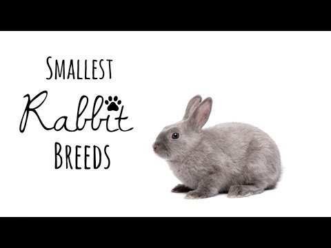 The Top Five Smallest Rabbit Breeds