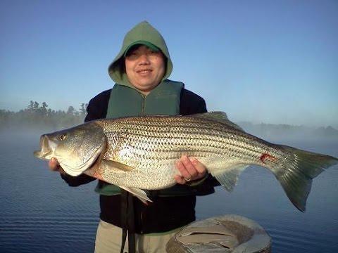 Lake Hickory--North Carolina Striper Fishing