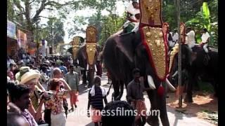 Elephants rally on Elephant Festival in Kerala