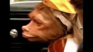 A Gnome Named Gnorm : Funny Scene