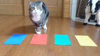 好きな色を選ぶねこ。 -Maru chooses his favorite color.-