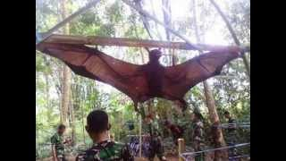 Vampire? Captured a Giant Bat in Peru Monstrous monster Bats Chiroptera WWW.GOODNEWS.WS