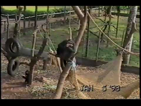 Cameroon December 1997