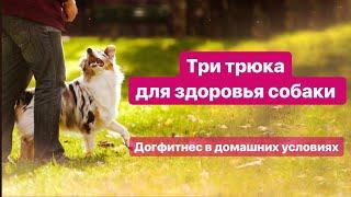 Урок 1. Три трюка для здоровья собаки. Дог фитнес в домашних условиях
