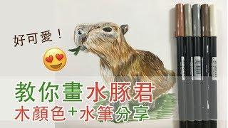 【cc drawing art.木顏色/水筆教學】教你畫水豚君