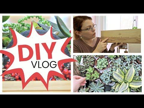 DIY VLOG - Comment j'ai créé un arrangement de succulentes dans une caisse | Tutoriel de succulentes