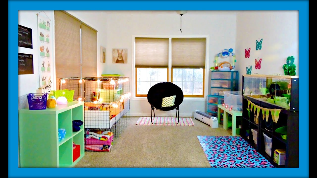 Delightful Pet Room Ideas 1 Maxresdefaultjpg House Plans
