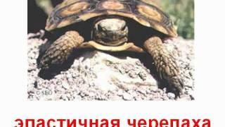 Животные пресмык черепахи и ящерицы звук