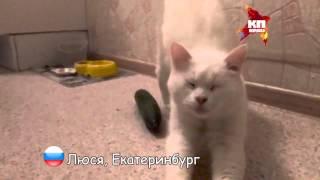 Русские коты ОГУРЦОВ не боятся!