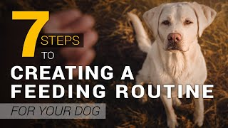 How to Create a Healthy Feeding Routine for Your Dog