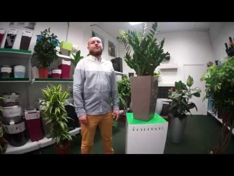 ARTPLANTS - растения для офиса