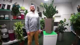 ARTPLANTS - растения для офиса(Интернет - магазин комнатных растений Artplants. Заходите на наш сайт - http://artplants.ru/!, 2015-06-29T12:15:31.000Z)