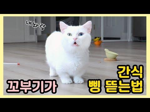 고양이가 집사한테 간식 삥 뜯는 법 - 꼬부기편