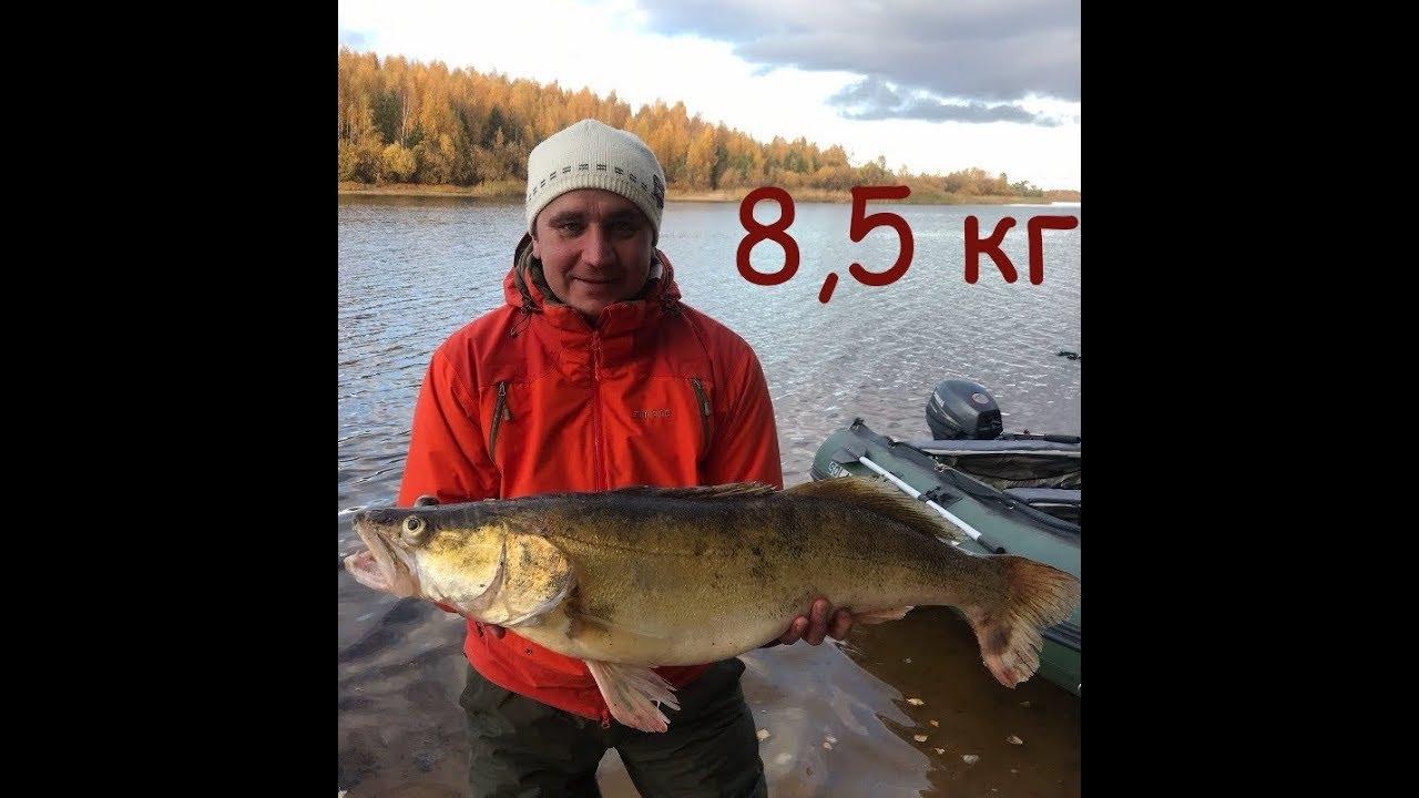 ОГРОМНЫЙ СУДАК!!8500 кг на Рыбинском водохранилище без эхолота