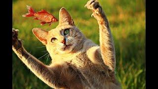 🐈 Кошка ест и пьет лапой, макает и вылизывает её
