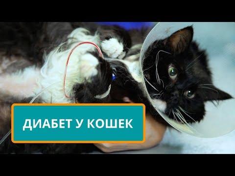 Вопрос: Кот страдает в 4 раз, почему ветеринар не признает вину?