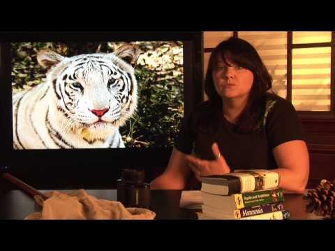 Animal Habitats : Where Does The Tiger Live?
