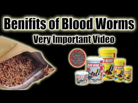 Benefits Of Fish Blood Worms