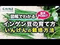 カインズ野菜図鑑 インゲンの育て方 の動画、YouTube動画。
