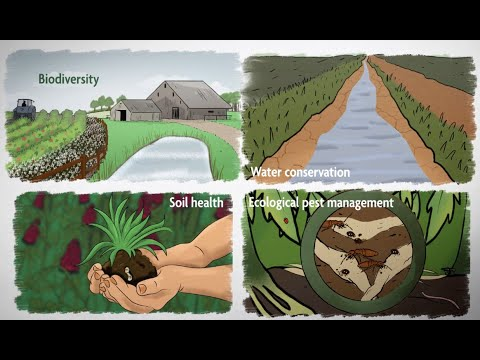What is Sustainable Agriculture? Episode 1: A Whole-Farm Approach to Sustainability