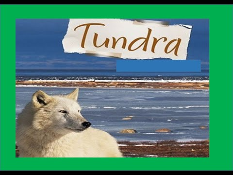 Tundra Biome - Facts ,Plants ,Animals ,Climate For Kids
