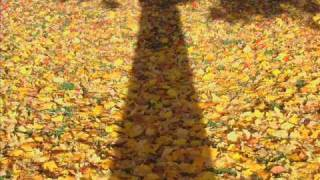 Autumn Flora & Fauna of New Jersey 2008 vol 3.wmv