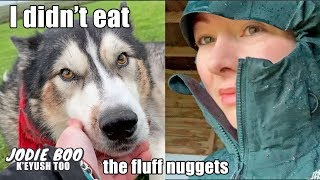 What My Husky Does During A Storm! Plus Exciting Surprise Revealed!