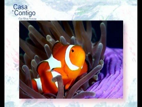 Peces adecuados para un acuario peque o youtube for Peces marinos para acuarios pequenos