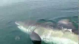 Reel horror7 scary shark sightings in 60 seconds