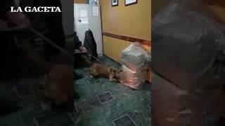 Video: Mirá la desesperación de este perrito de Gendarmería cuando encuentra droga