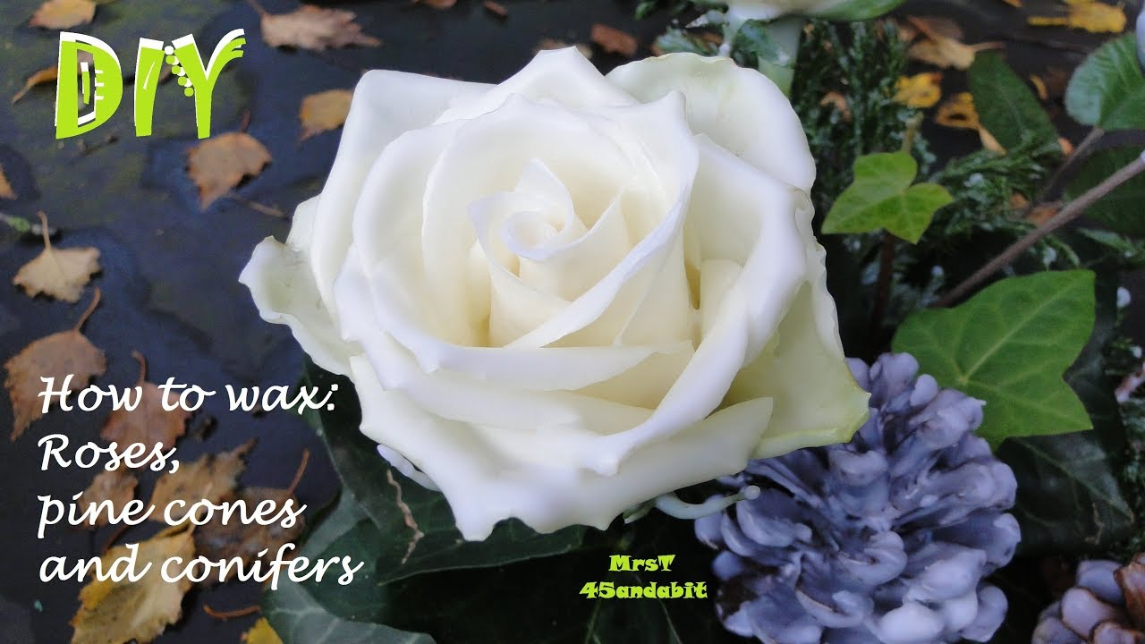 Diy How To Preserve Roses With Wax Waxed Pine Cones Conifers