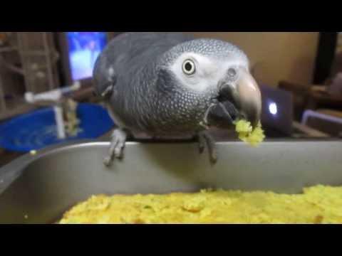 Ethel our Timneh African Grey Parrot Tasting fresh Birdie Bread