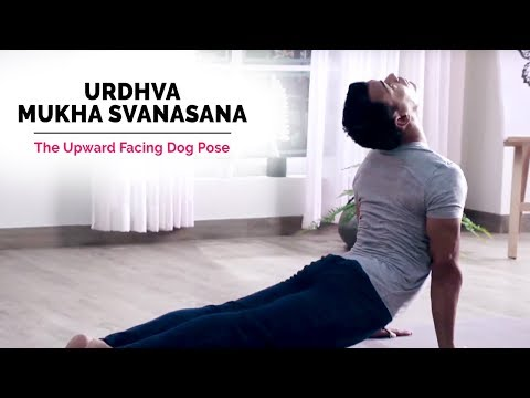 Urdhva Mukha Svanasana | Upward Facing Dog Pose | Steps | Benefits | Yogic Fitness