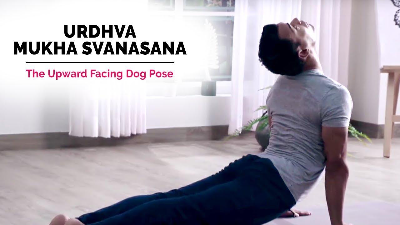 Upward Facing Dog Pose Steps
