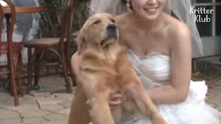 Dog Mega Fails At Modeling For A Wedding Shoot. Will He Get Better? | Doggo Had One Job EP1