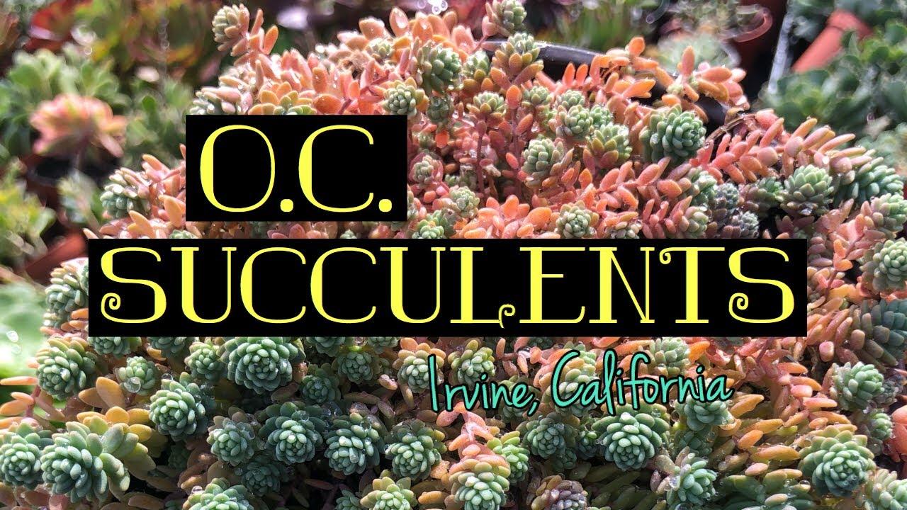O C Succulents In Irvine California