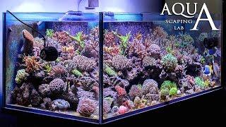 Aquascaping Lab  Elementi base e funzionamento dell39; acquario marino