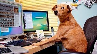 Заработок на Shutterstock, первые успехи а также инструкция для новичка