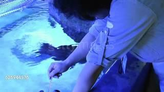 Cum se spală pe dinți un pește