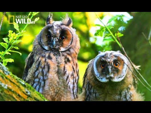 Wildlife in Forest, incredible animals HD Docs 2017 New