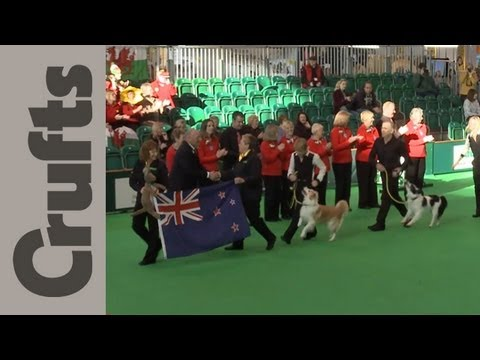 World Cup Obedience Part 1 - Crufts 2012