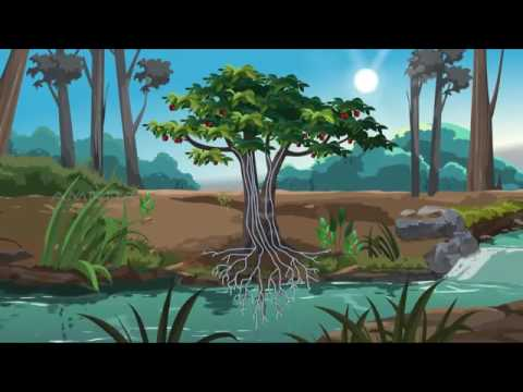 63 Gambar Animasi Tumbuhan Paling Bagus