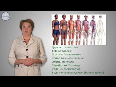 Видеоурок структура тела место человека в живой природе