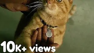 Nick Fury With Goose The Cat Captain Marvel Trailer 2|See description to win $20 via amazon.