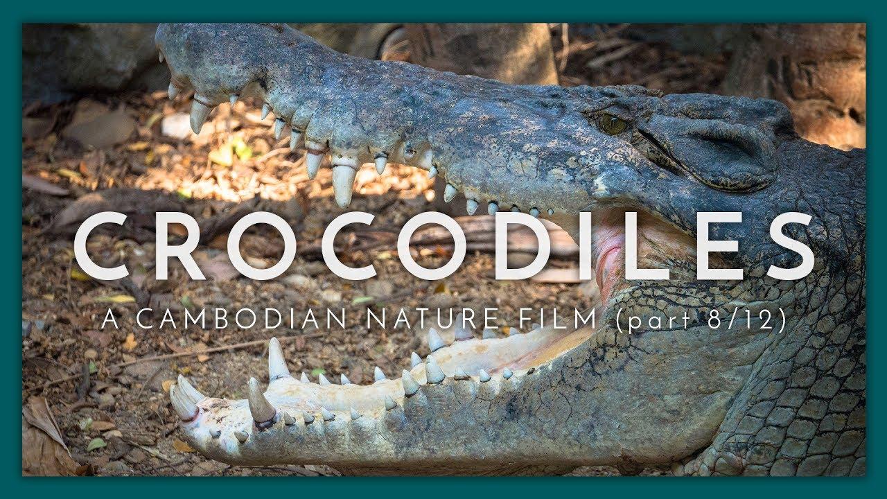 A Cambodian Nature Film - (Part 8 / 12)