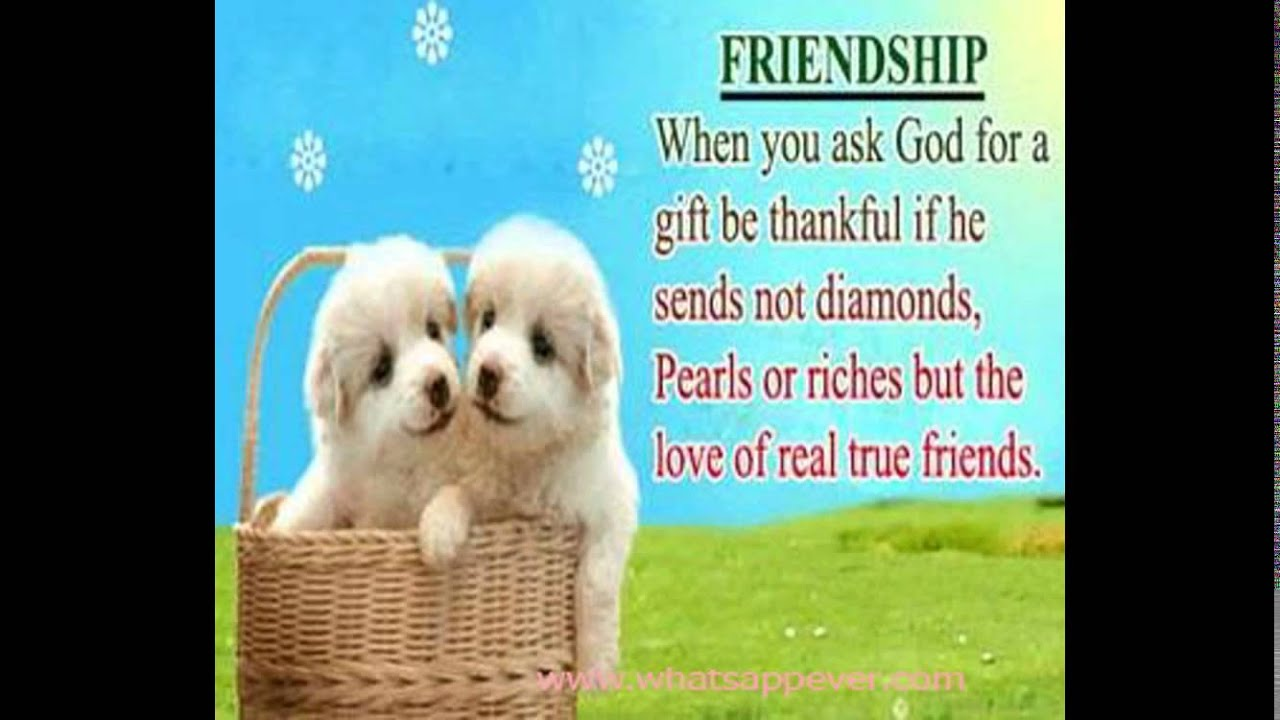Inspirational Quotes About Friendships Inspirational Friendship Quotes  Whatsapp Funny Videos & Whatsapp